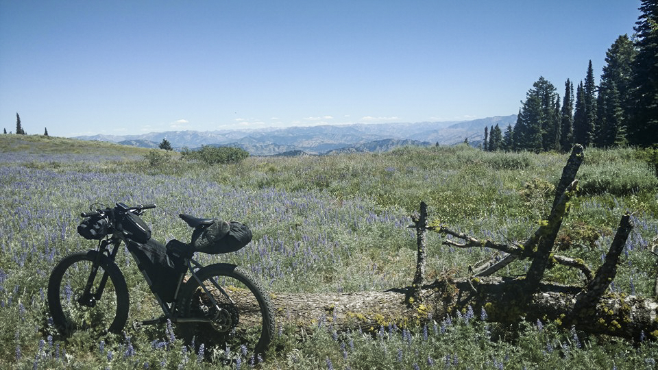 Hayduke in the lupines-2
